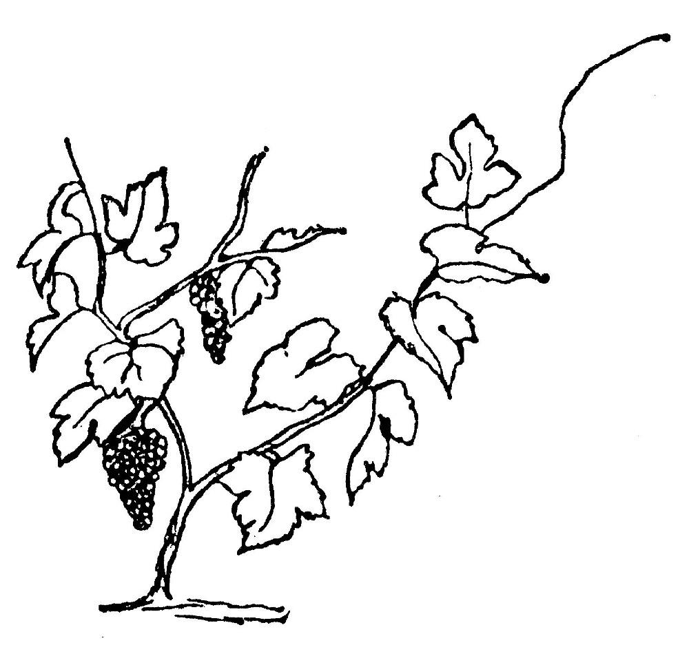 Lear 2 - Vine-small.jpg