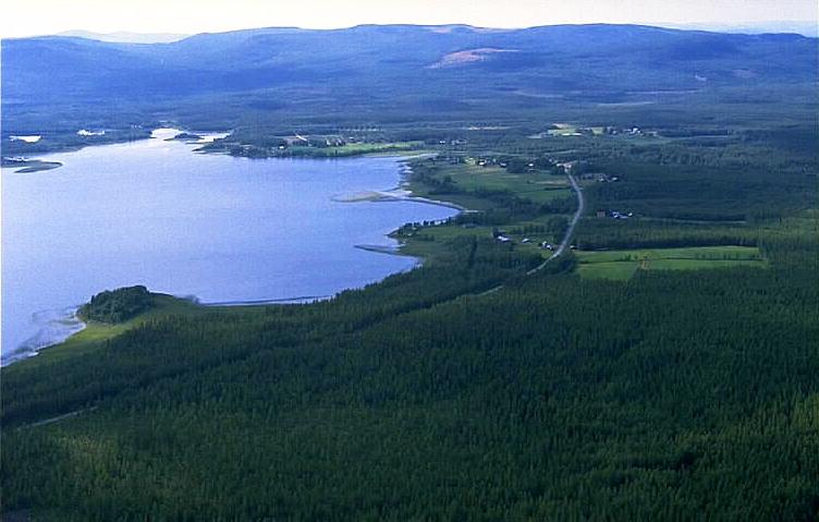 Fil:Manjrv in Norrbotten, Sweden unam.net Wikipedia