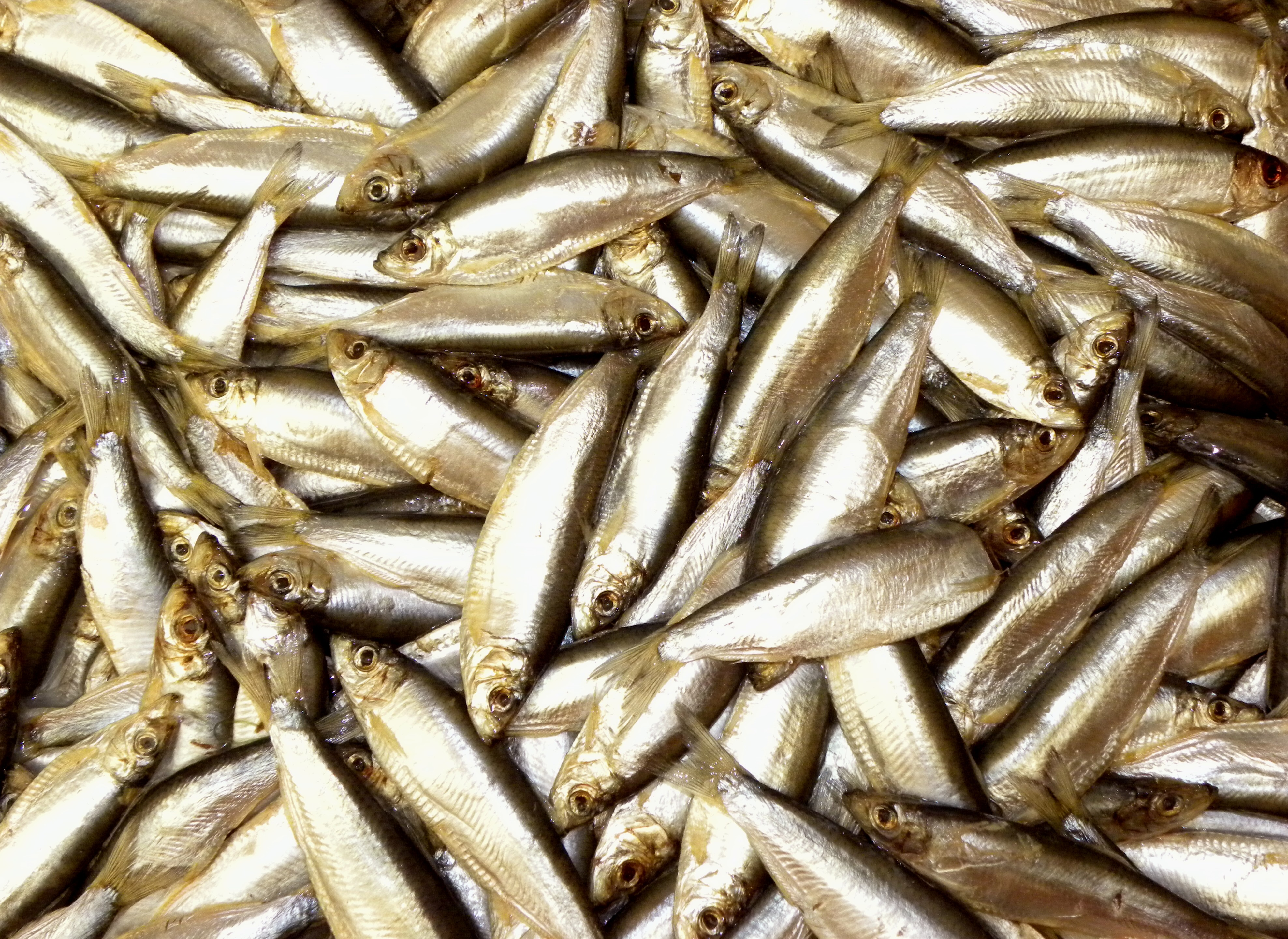 File many for Fish smell disease