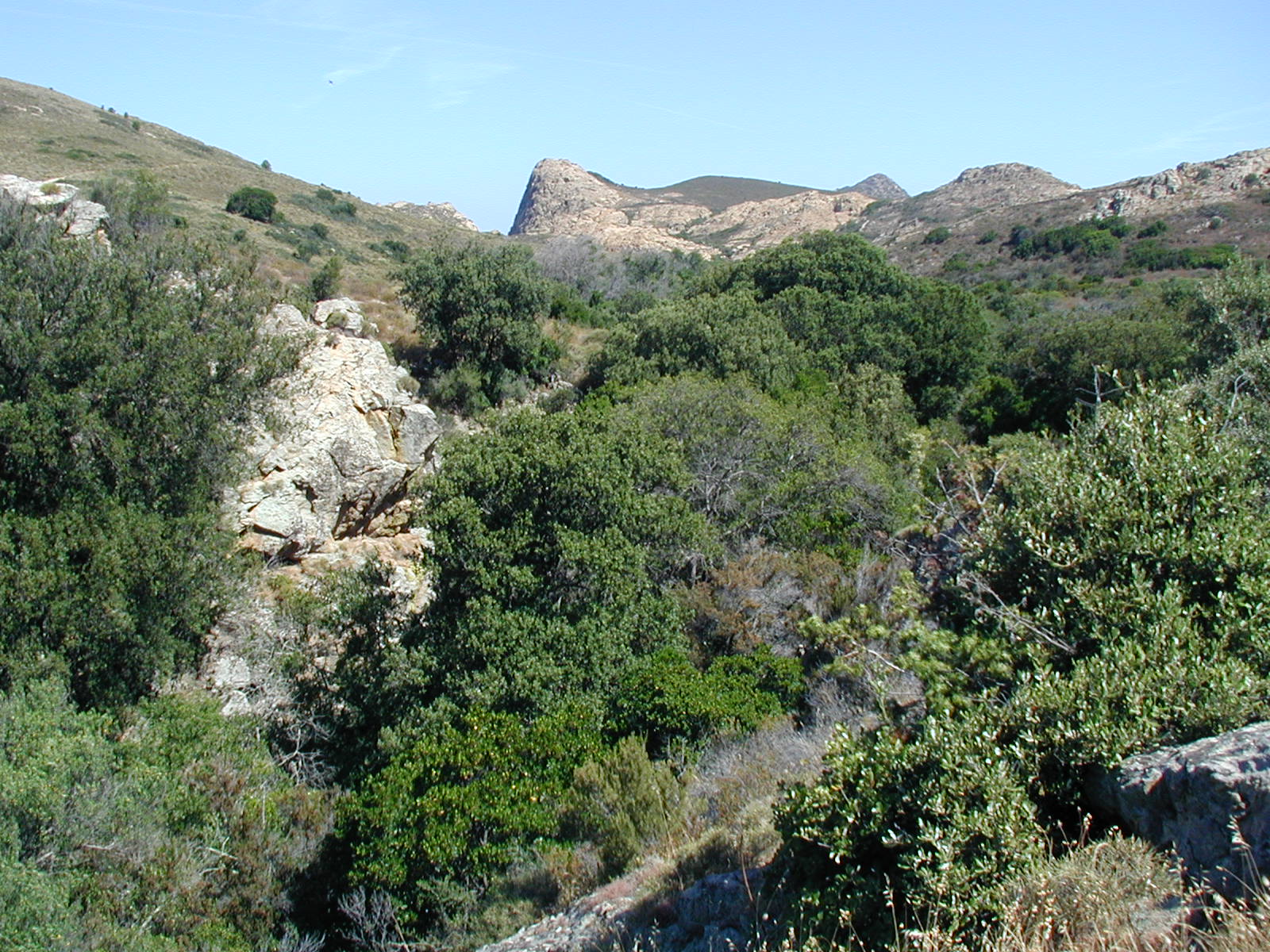 Rivage poétique Maquis_and_garrigue_in_Corsica3