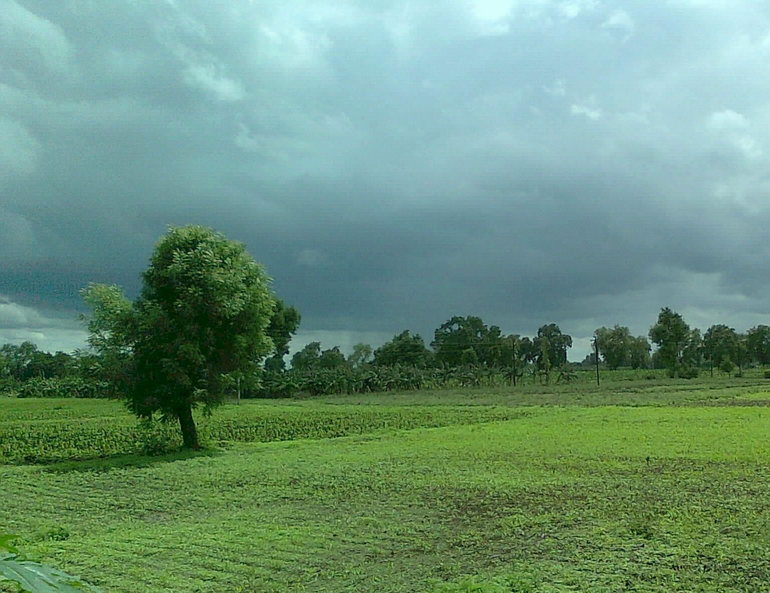 Background image jpg - File Monsoon Clouds In Background Of Neem Tree Jpg