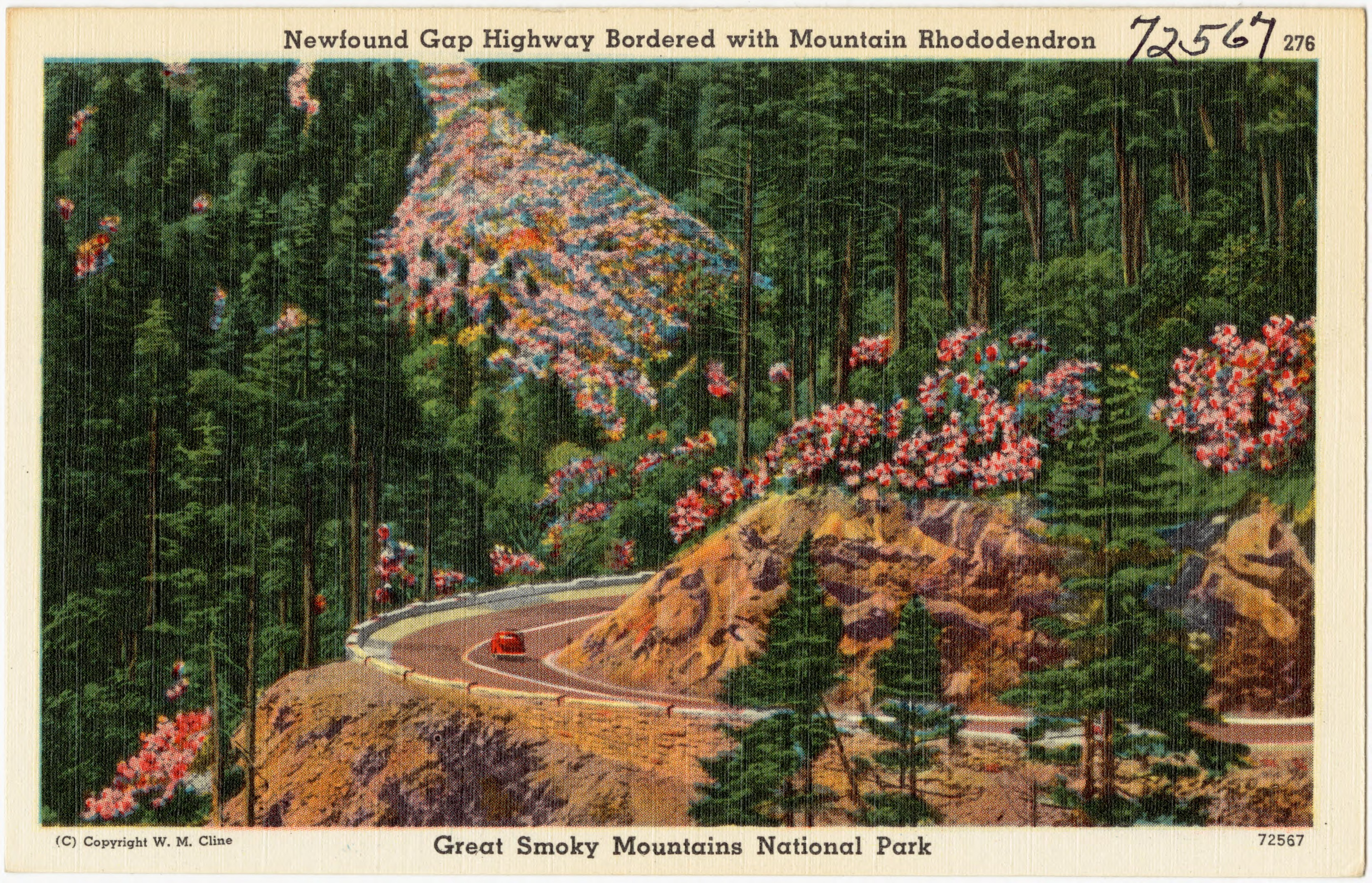 Oval Tablecloth Size Chart: Newfound Gap Highway bordered with Mountain Rhododendron ,Chart