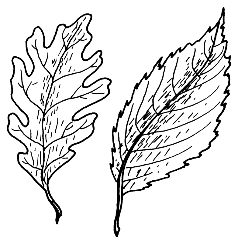 Image Result For Free Acorn Coloring