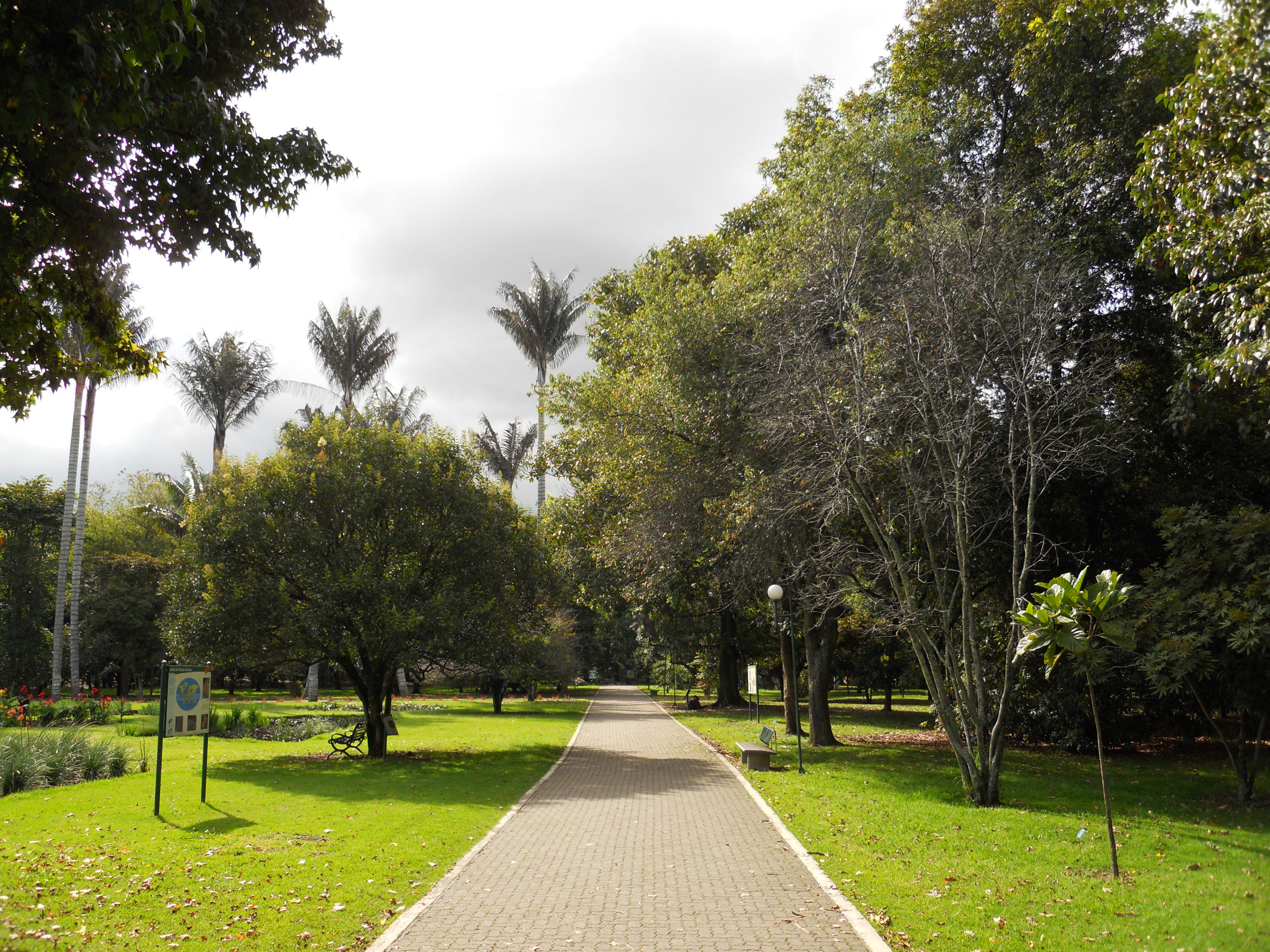 File palmas de cera en el jard n bot nico de bogot jpg for Jardin botanico san felipe