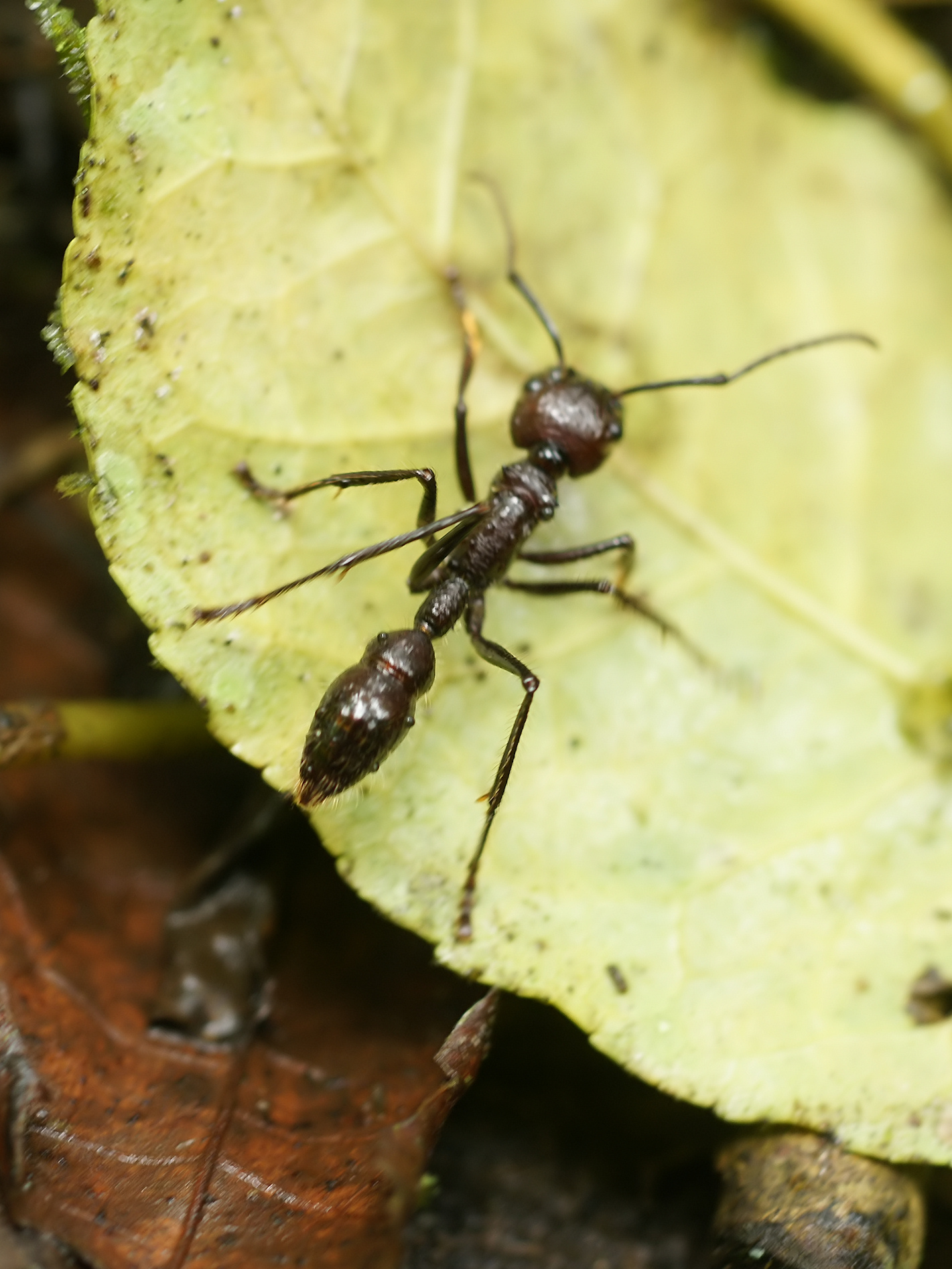 Top 10: Insectos Peligrosos