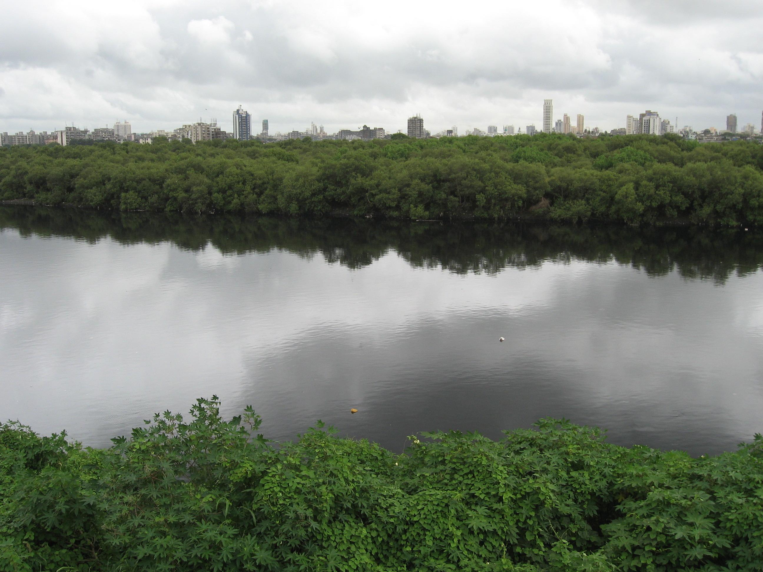 Description river mithi 3