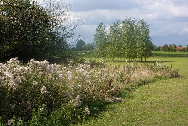 Rural scene near Needham Market - geograph.org.uk - 1440940
