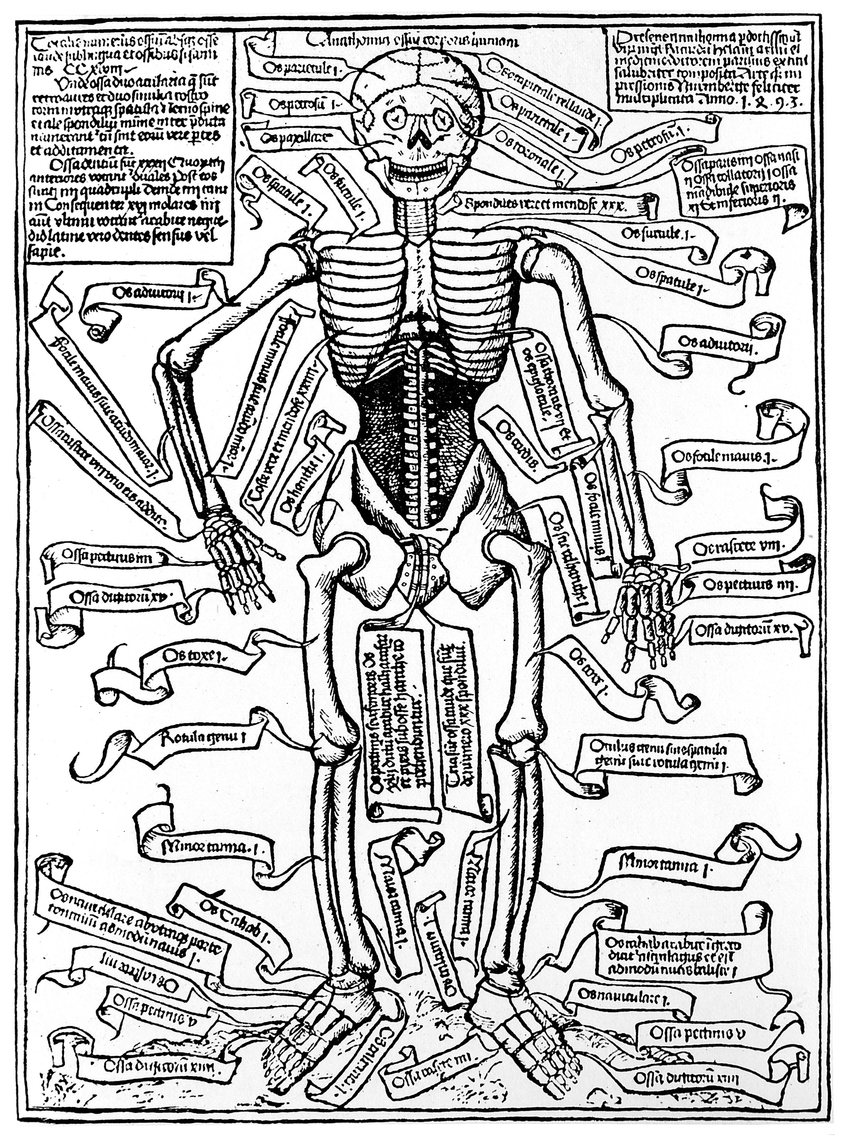 File:Skeleton of Richard Helain, 1493. Wellcome M0000411.jpg