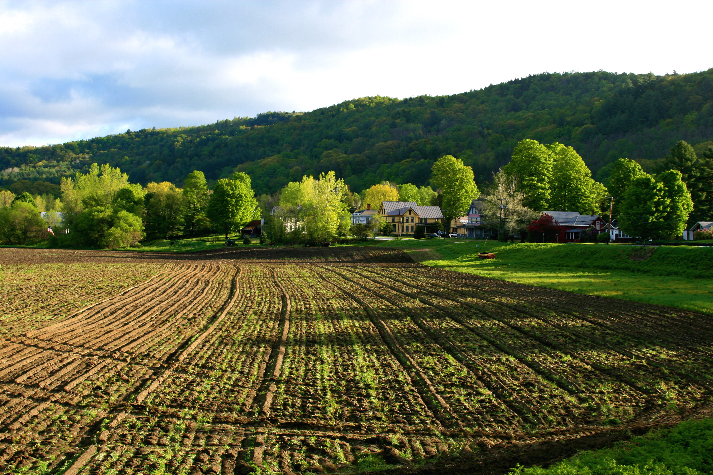 Descripziun spring field in bethel, vermont