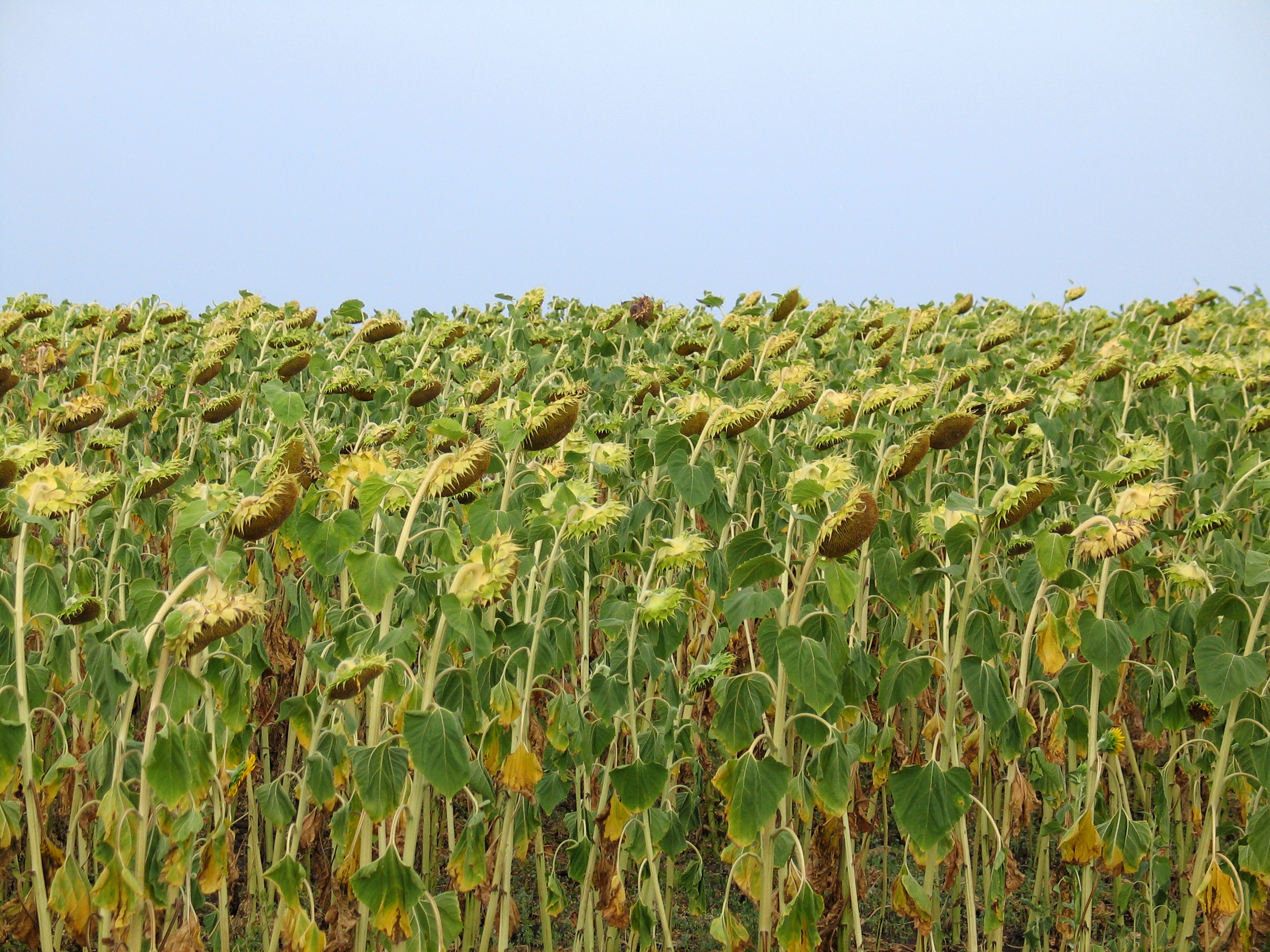 Вместо профессиональных стандартов для полеводов, овощеводов и садоводов утвержден новый профстандарт для мастеров растениеводства