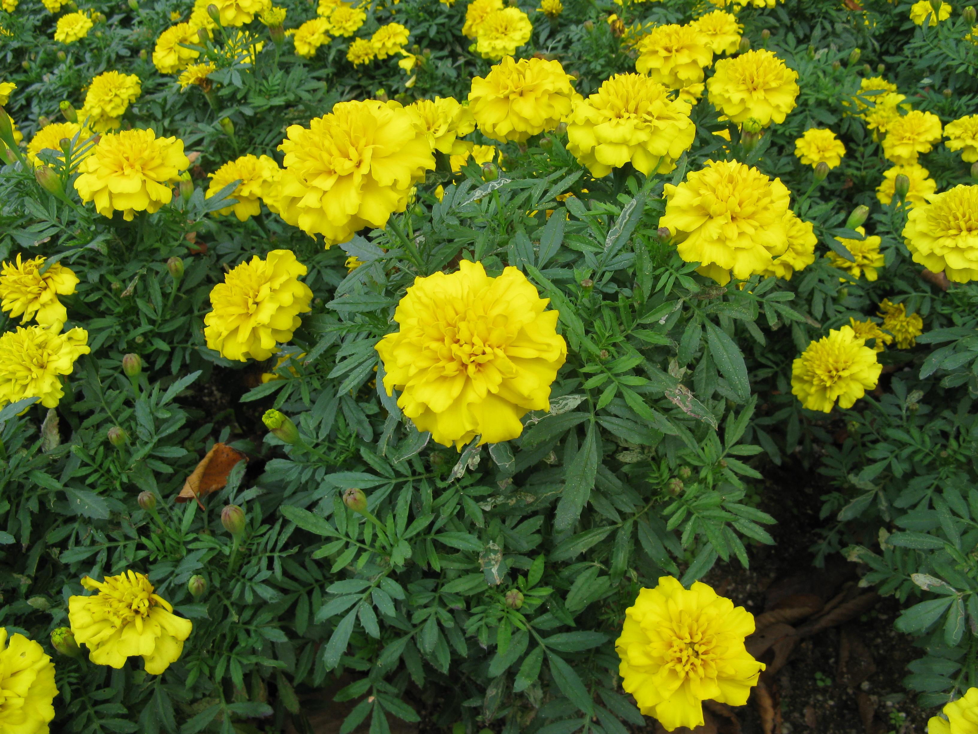 Http Yellow Place En Bellet Travel Jerseyville Usa