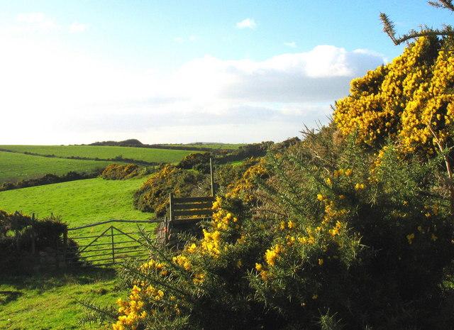 The Llyn Coastal Path east of Cadfan Isaf - geograph.org.uk - 611596
