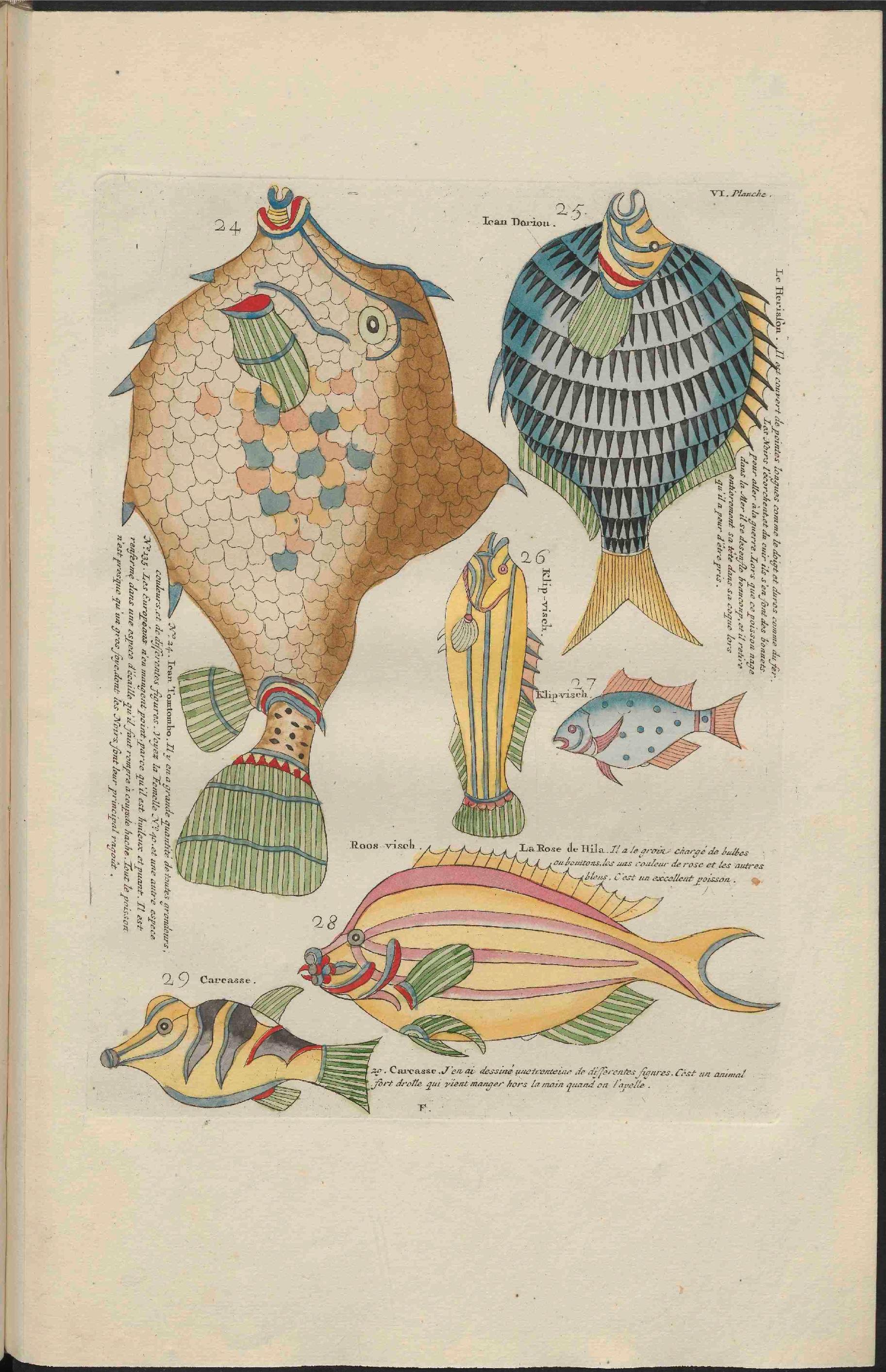 D Ou Vient Le Cuir file:ub utrecht - louis renard - 1782 - natuurlyke historie