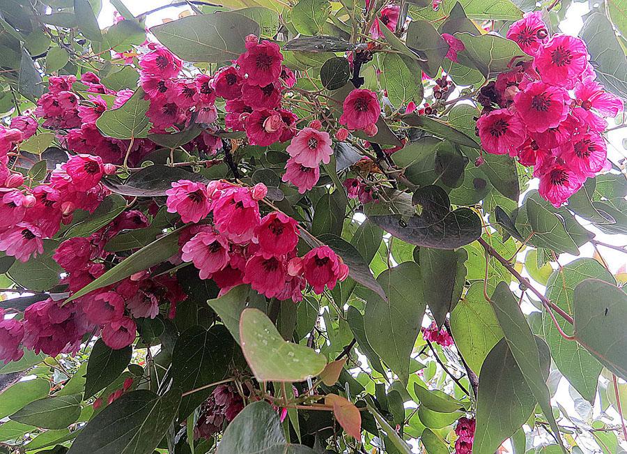 semen de color oscuro - Foros de Medicina y Salud de