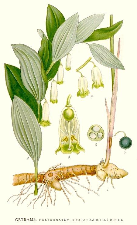 Selo-de-salomão