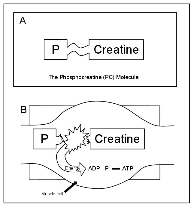 the atp-pc system resynthesis
