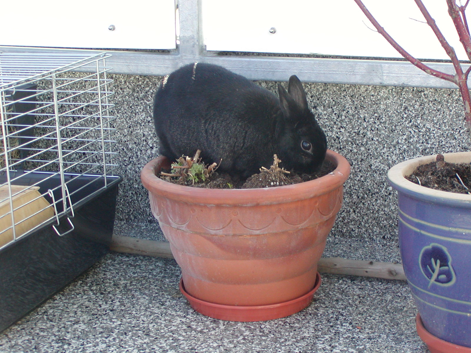 A black rabbit.jpg