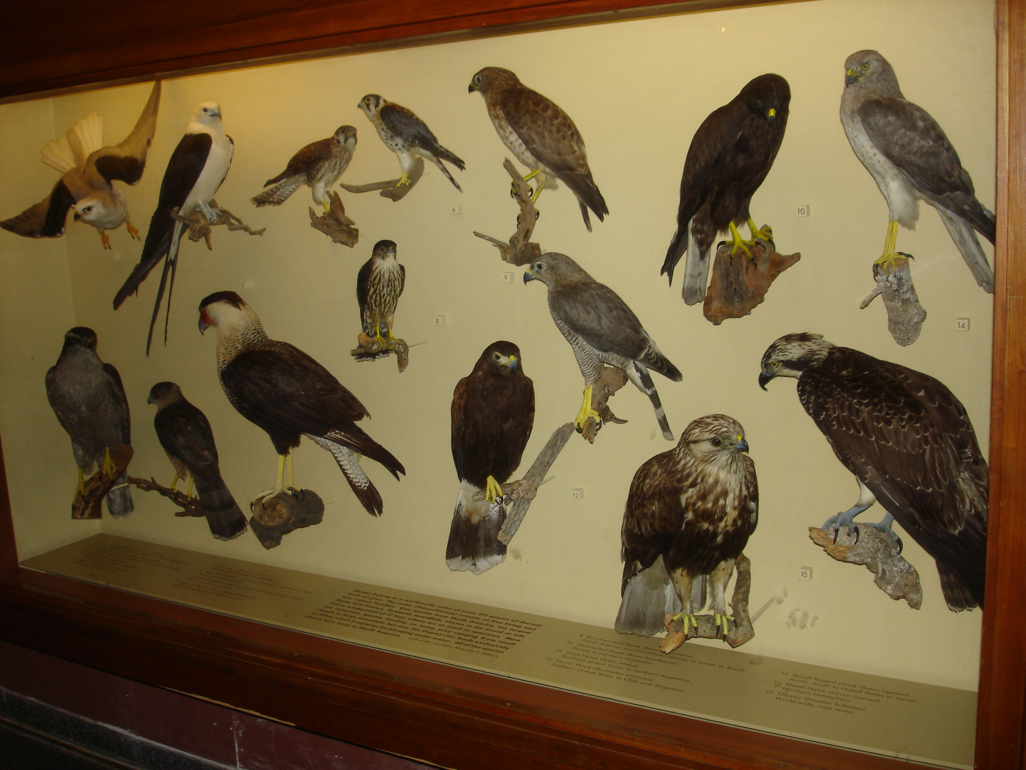File American Museum Of Natural History In Manhattan New York City United States Of America 9860151986 Jpg Wikimedia Commons