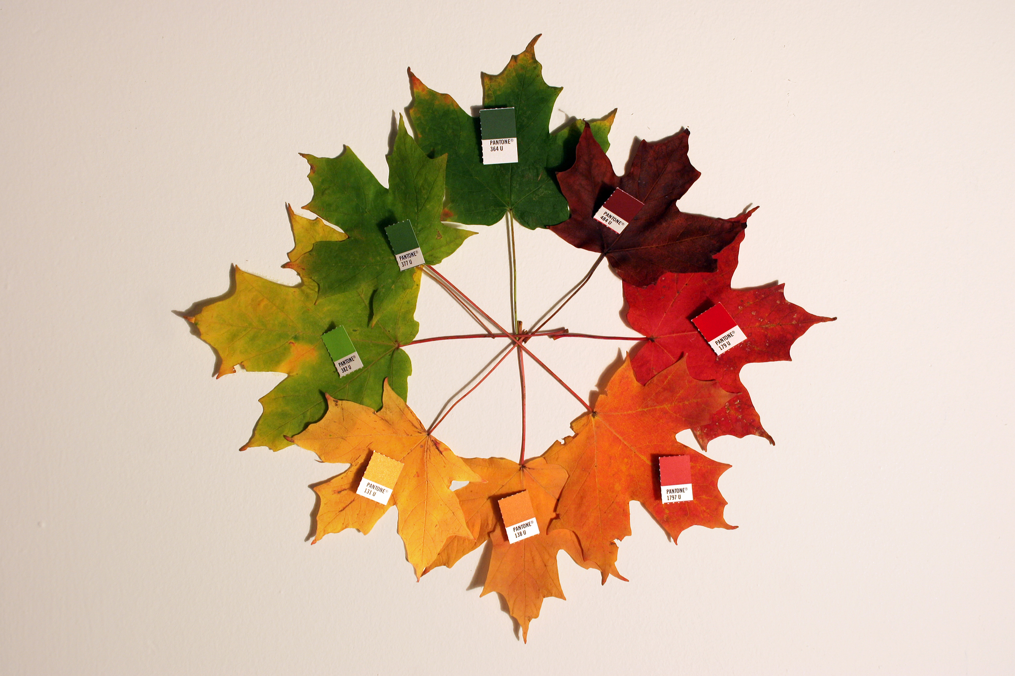 Image Result For Autumn Leaves To