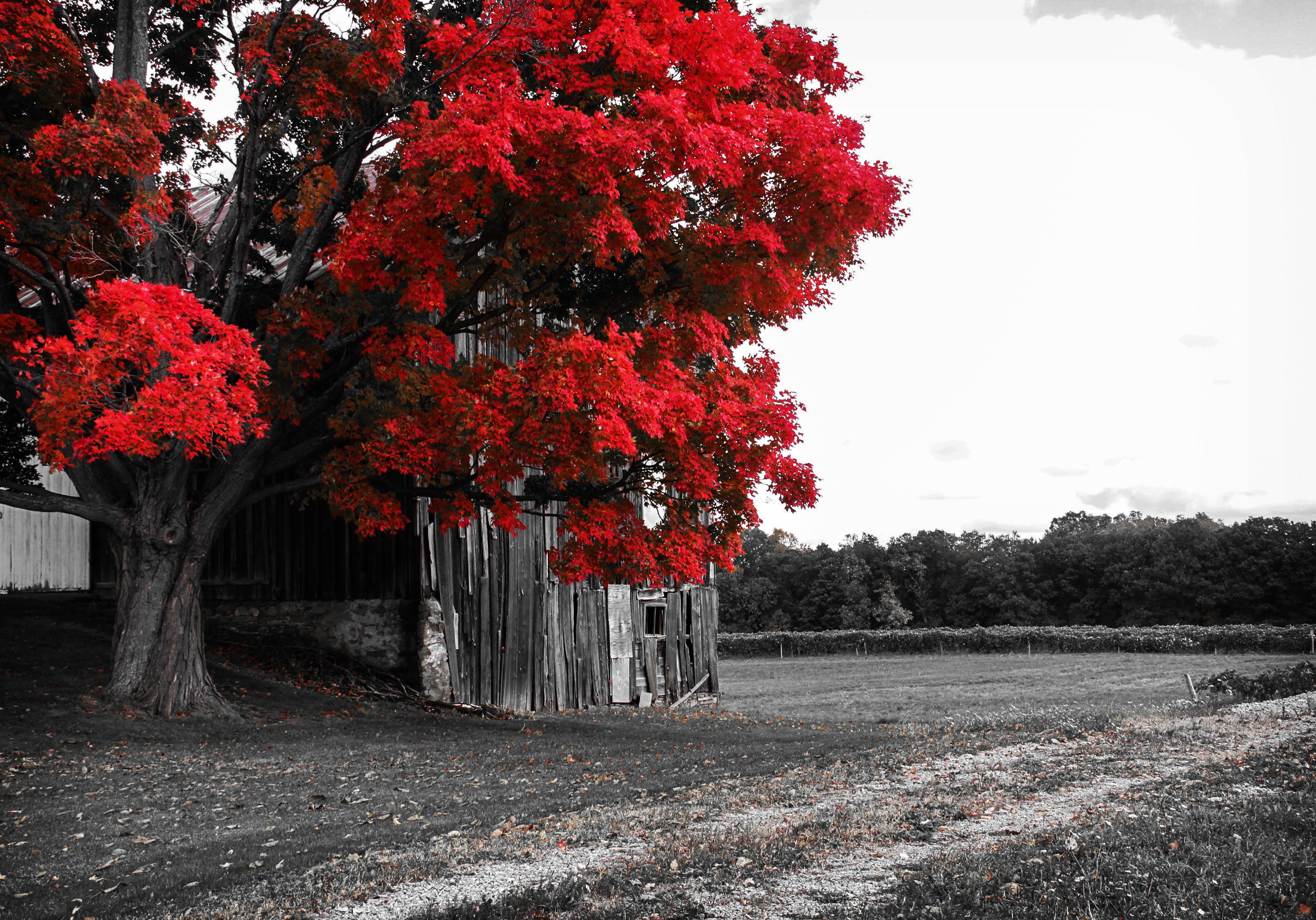 fileblack white and red 22291502866jpg wikimedia