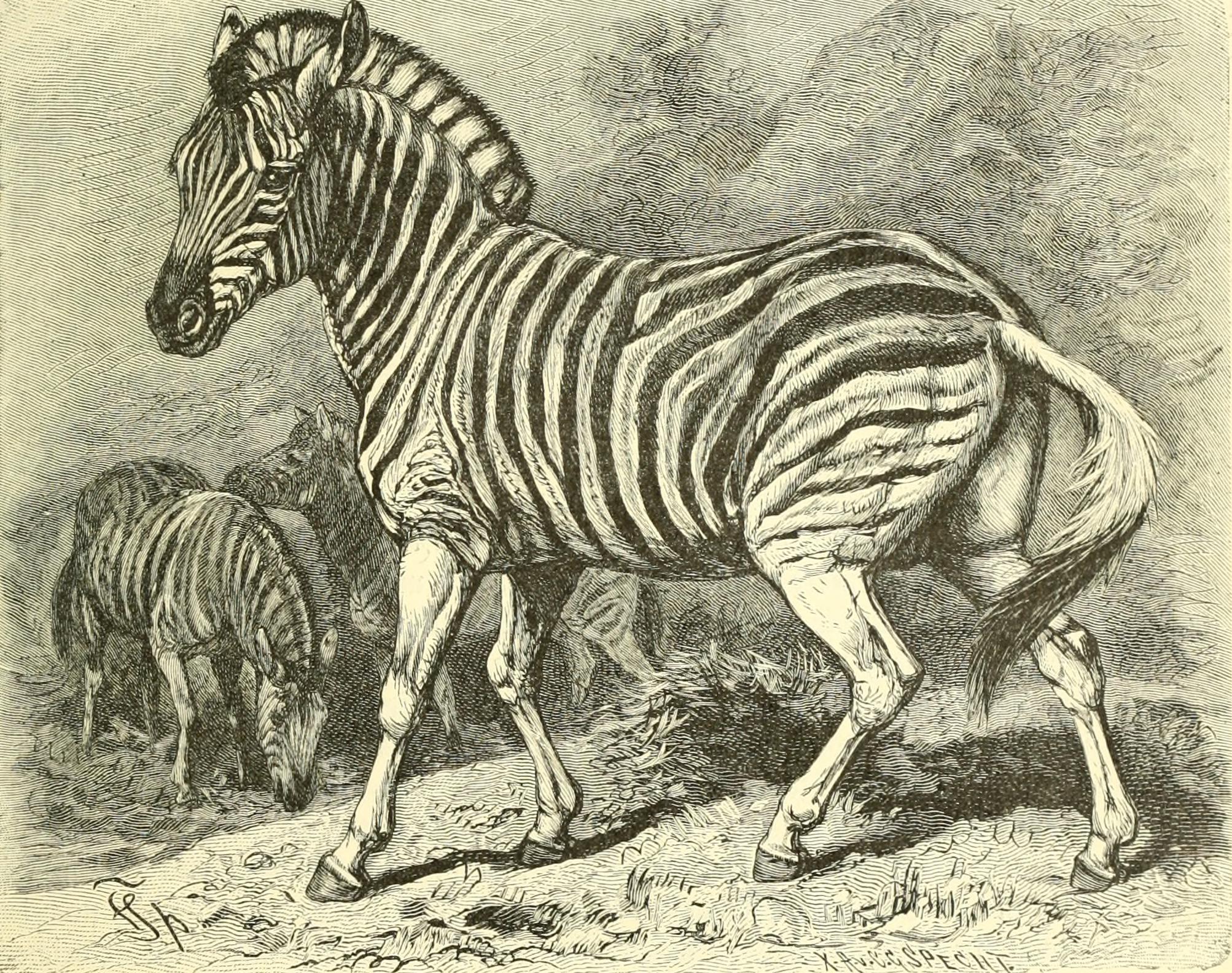 Ziemlich Farbe Zebra Druck Fotos - Beispielzusammenfassung Ideen ...