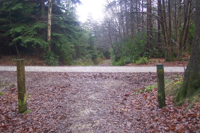 Bridleway crossroads in Hemsted Forest - geograph.org.uk - 1620401