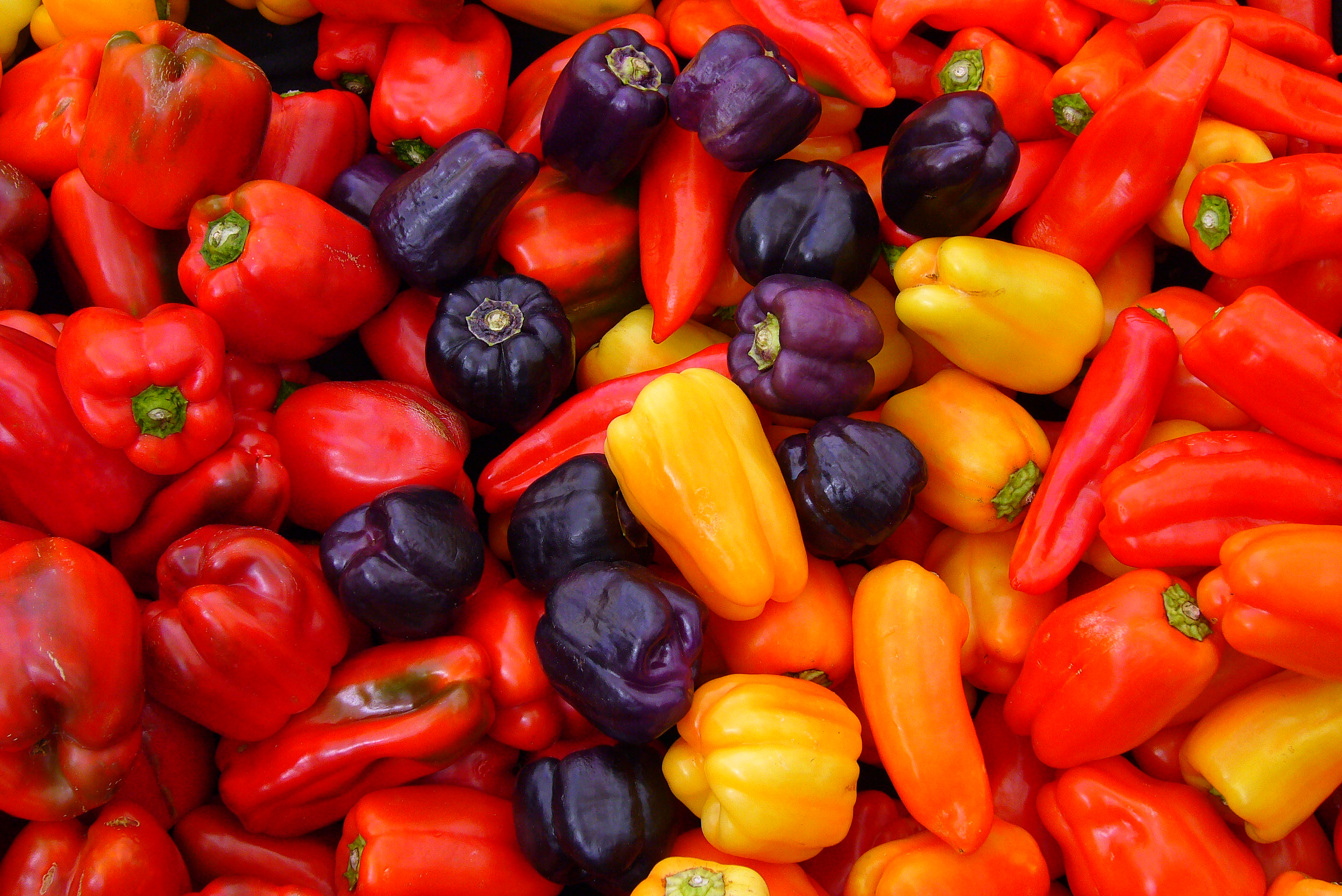 File:Capsicum annuum.JPG - Wikipedia, the free encyclopedia
