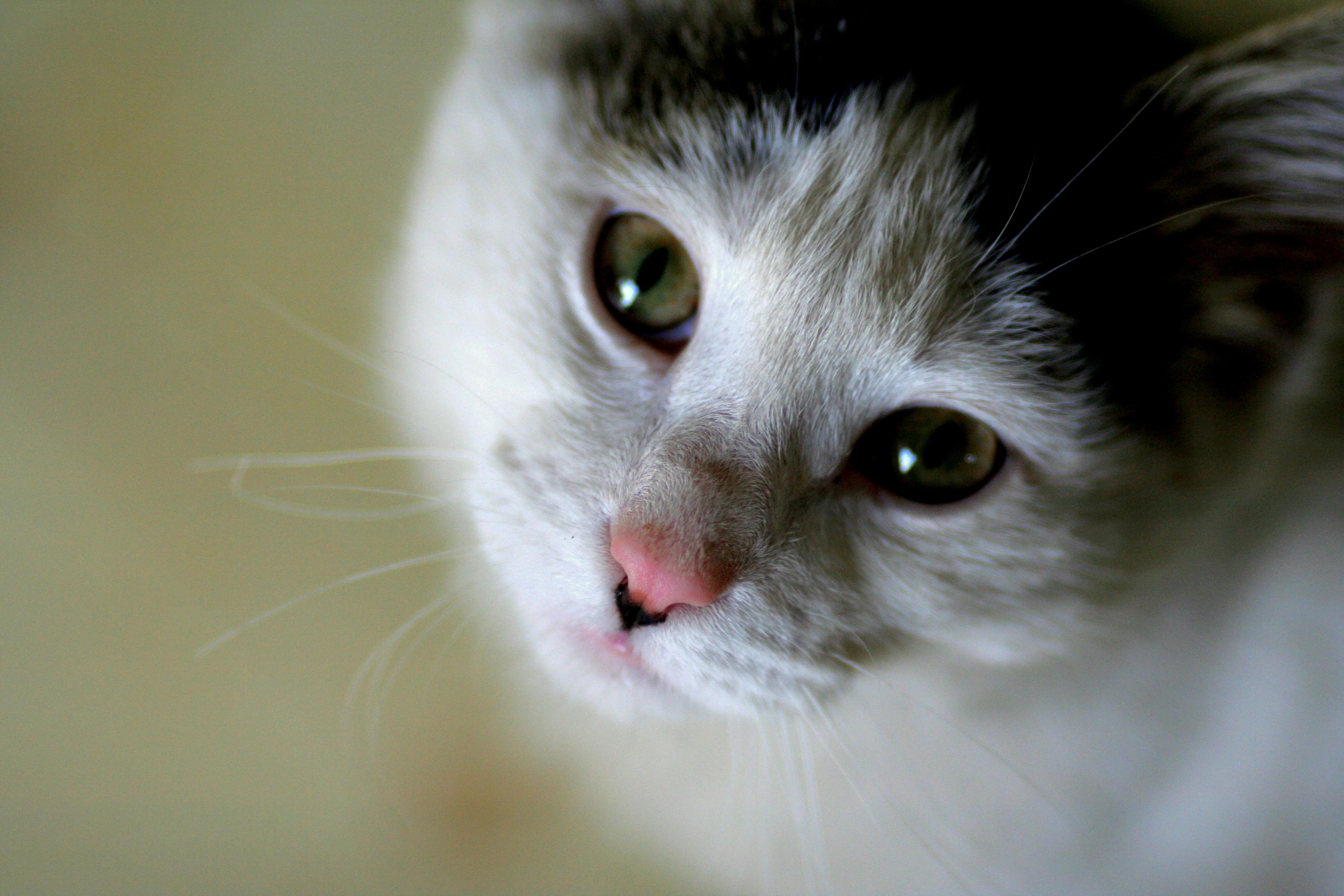 Funny Cats Hd Pics