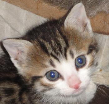 Cat Http I Imgur Com Rtoej Gif