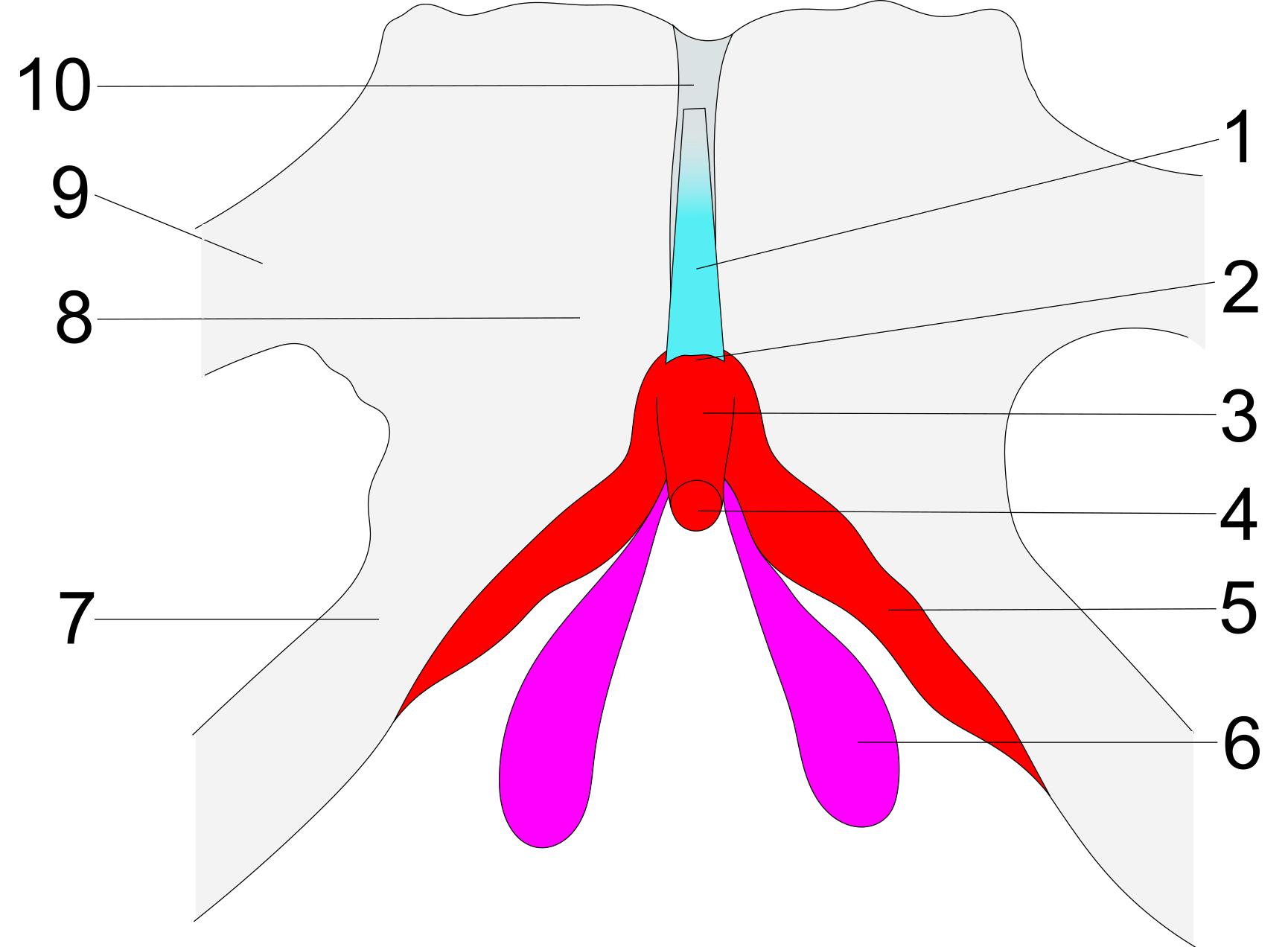cum să scapi rapid de o gleznă umflată ce este circulația venoasă profundă