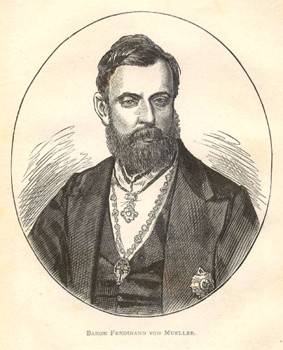 File:Ferdinand Jacob Heinrich von Mueller00.jpg