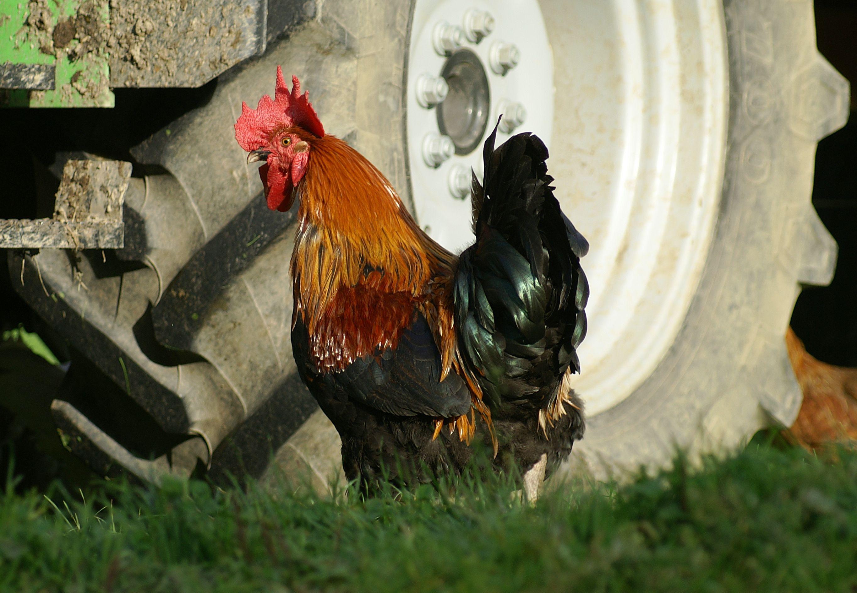 képek a nagy fekete meleg kakasokról ingyenes romantikus pornó