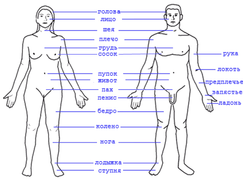 Body Parts For Cars And Trucks