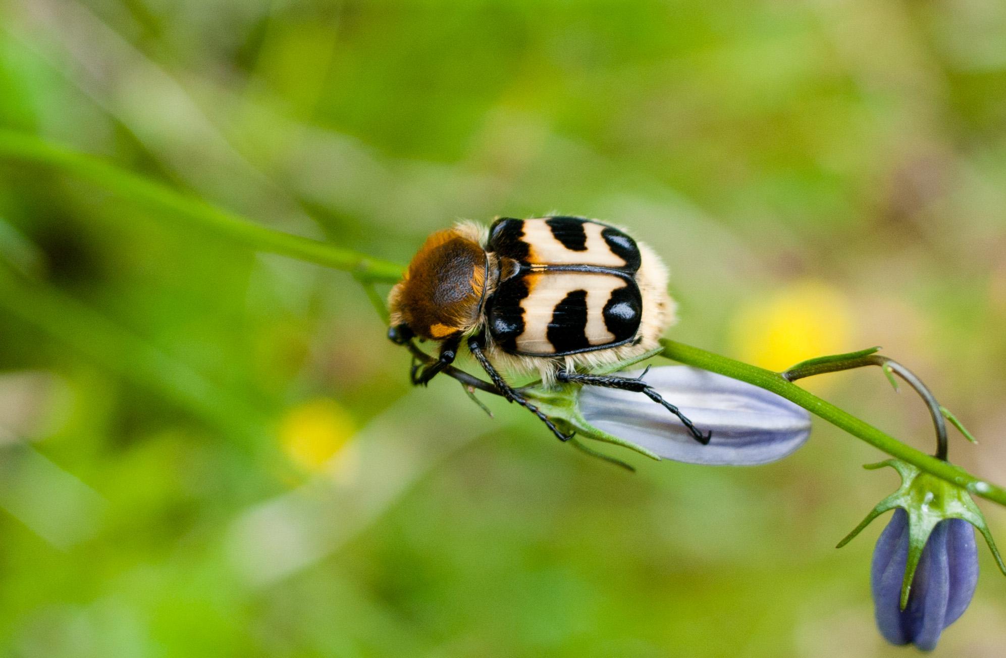 местных картинка жук летит к цветку поезде, соседка плацкарту