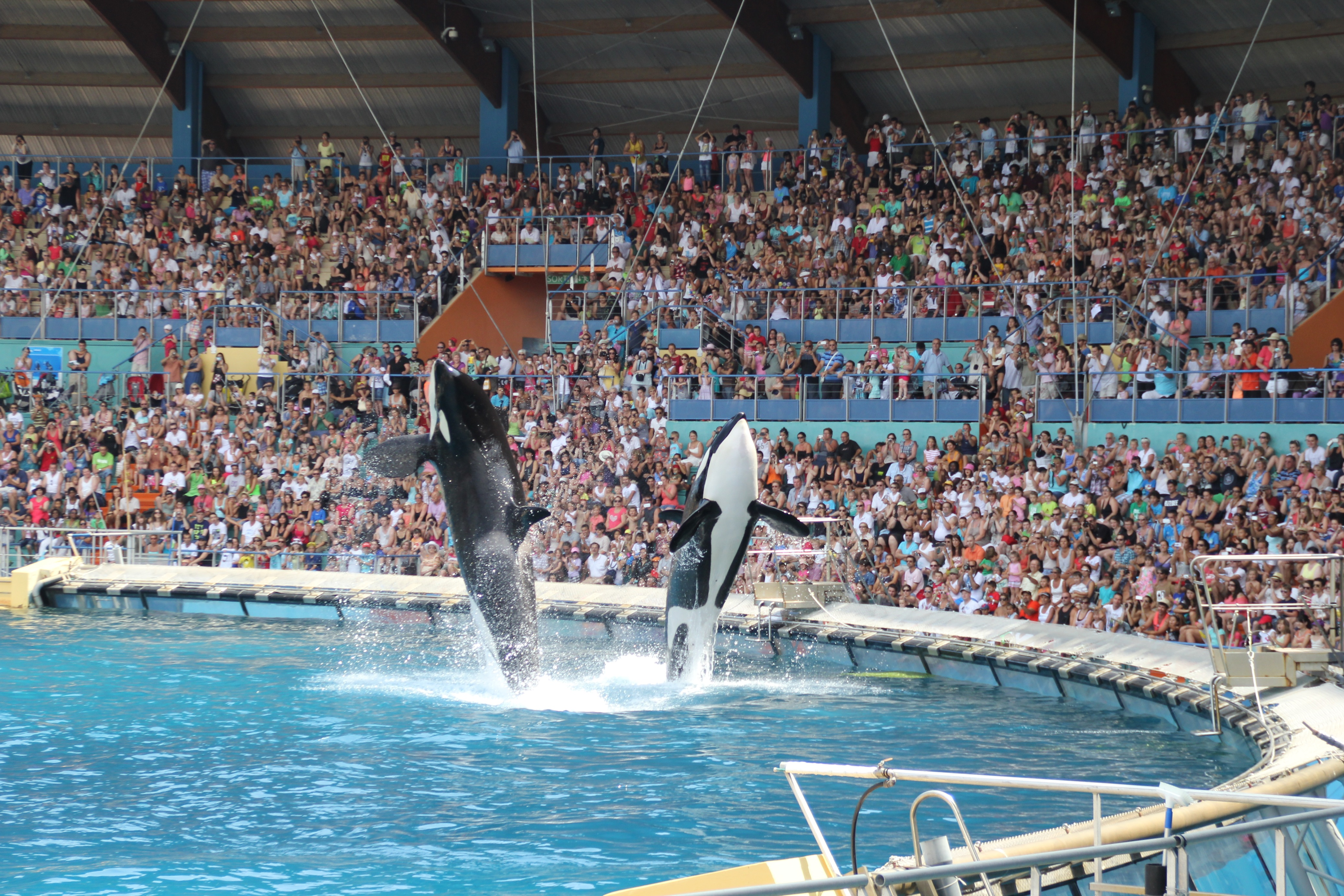 File:Jumping Orcas at Marineland, Antibes, France.jpg ...