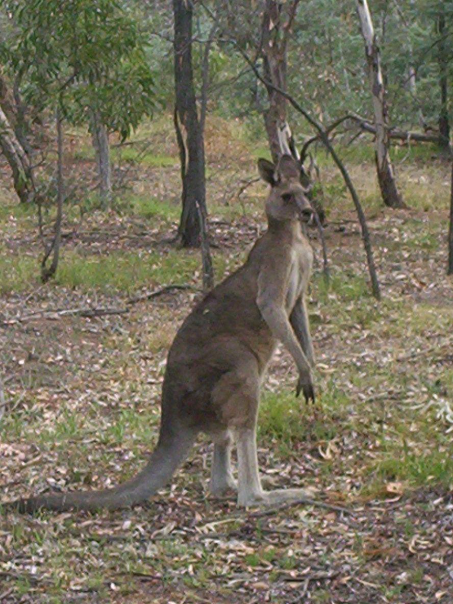 Canberra Nature Park Plan Of Management