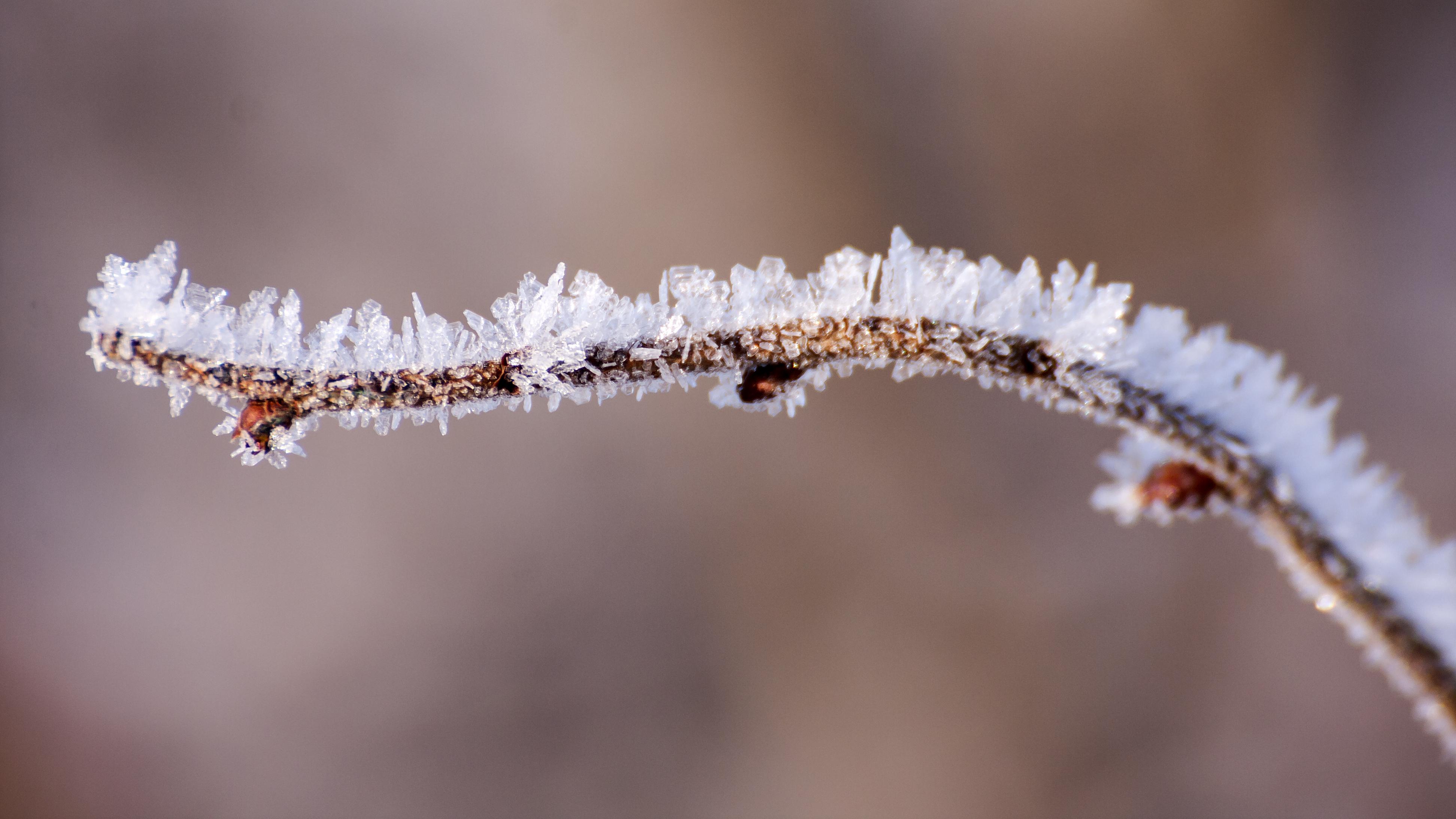 File:Kvist med rimfrost.jpg - Wikimedia Commons