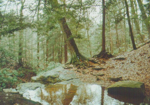 File:Linn Run State Park Waterhole.jpg