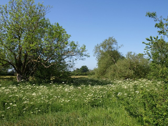 Meadow by Pudding Brook - geograph.org.uk - 1337101