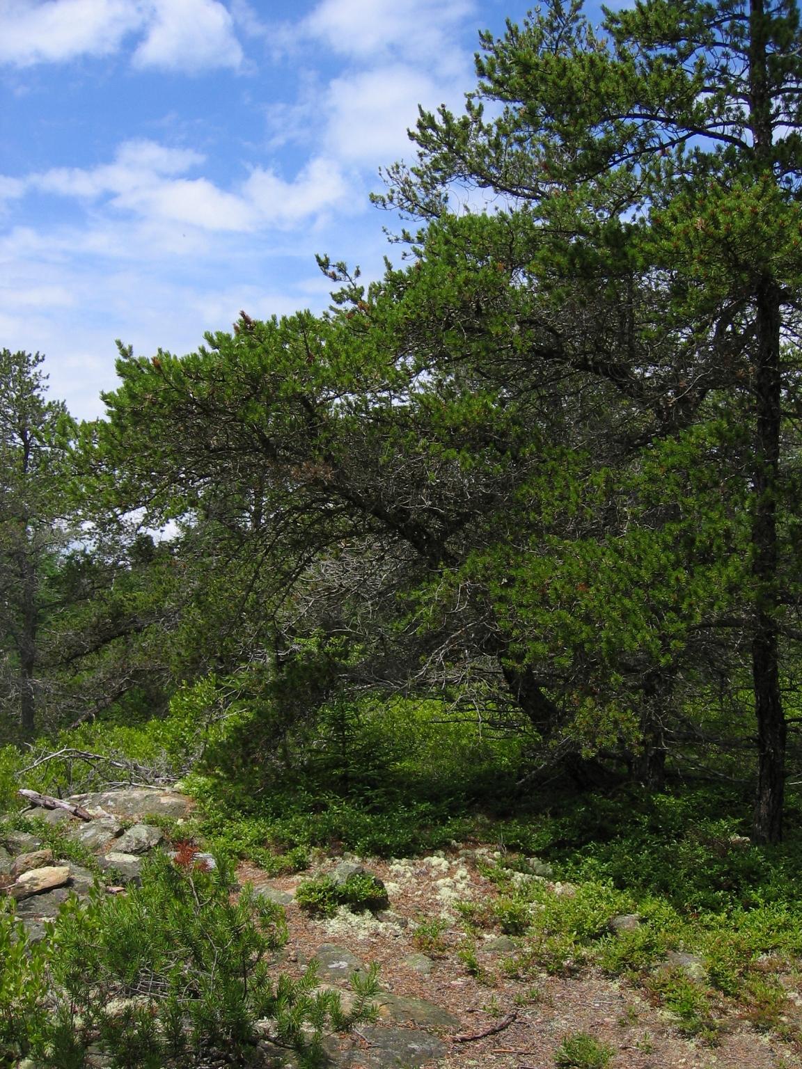Maine Natural Health
