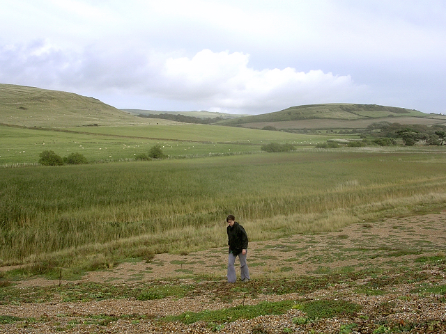 Reed beds at the northwestern end of the Fleet, behind Chesil Beach - geograph.org.uk - 25117