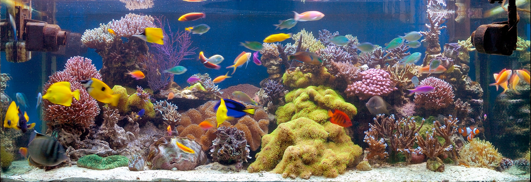 File reef for Marine fish tanks