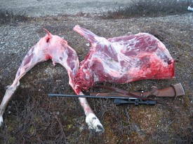 Caribou meat from hunt. Greenland
