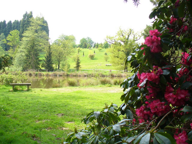 Rhododendron at Bedgebury - geograph.org.uk - 796928