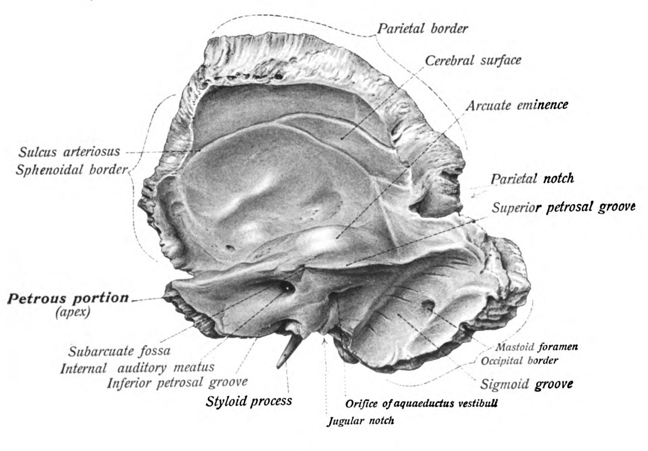 Sobotta Atlas Of Anatomy