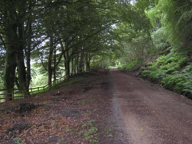 South Tyne Trail near Softley Farm - geograph.org.uk - 886412