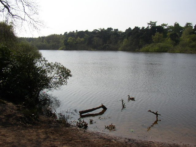 The Pond at Twigmoor Woods - geograph.org.uk - 55525