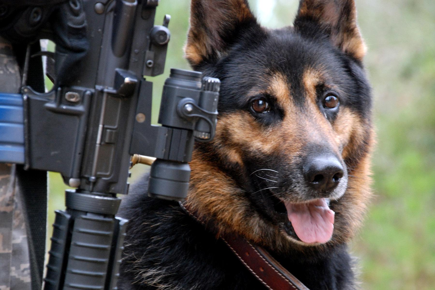 Description USAF War dog.jpg