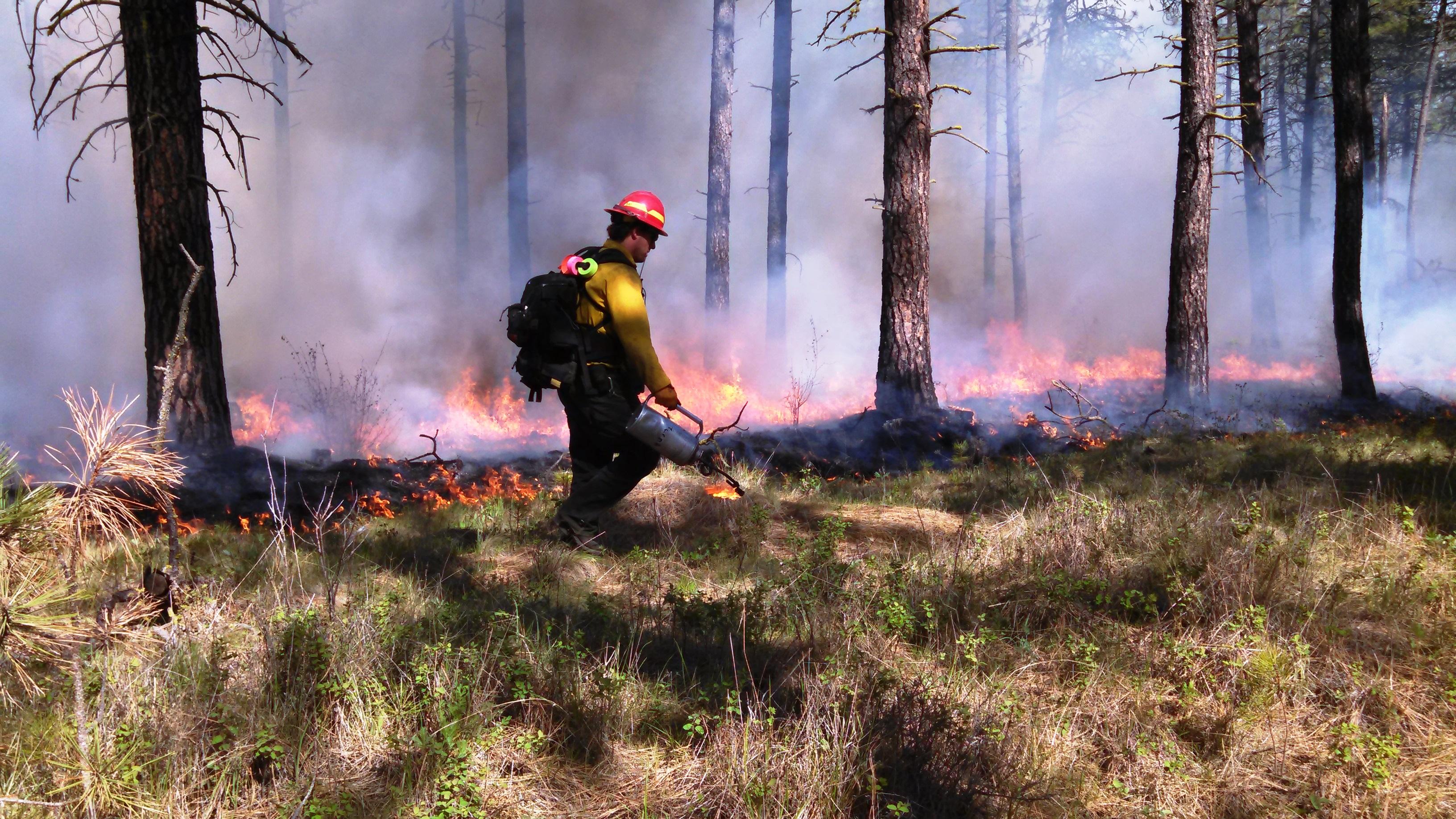 Controlled Burn Wikipedia