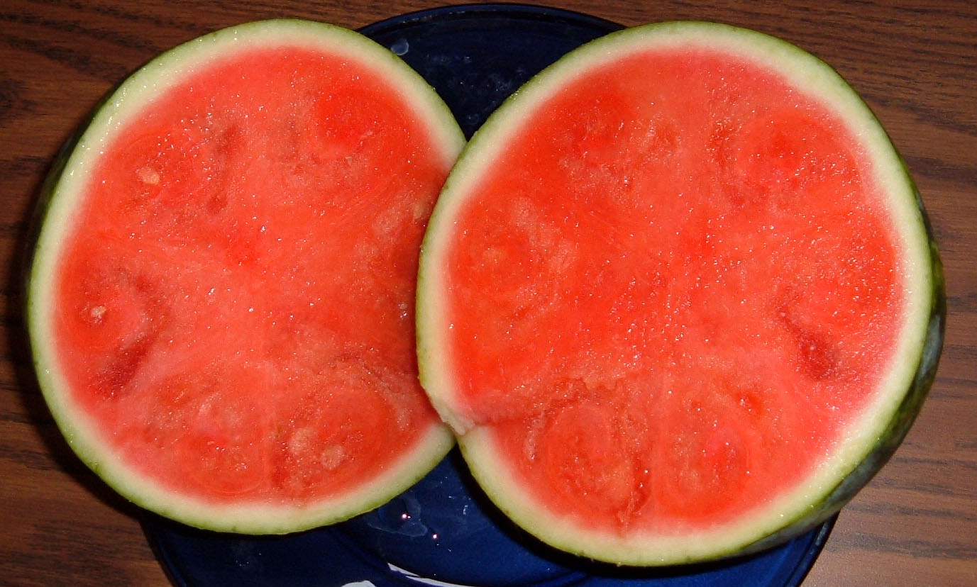 seeded vs seedless watermelon Watermelons are rendered seedless by colchicine, a chemical derived  but  does the flesh taste less sweet than the black-seeded variety.